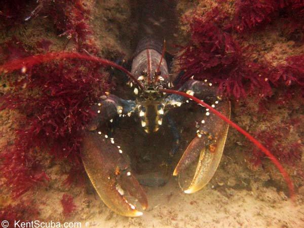 Lobster Ledge