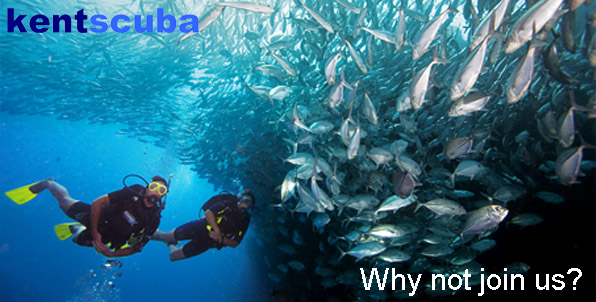 Why not join our dive club?